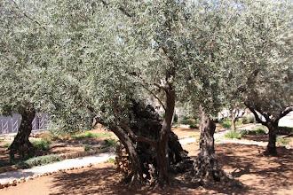 Photo: Na het ontbijt gaan we naar Gethsemané. Daar beginnen we, zoals iedere dag, met een openingsdienst.