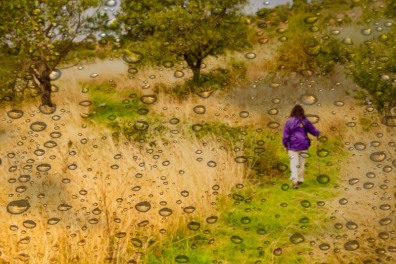 Tappeto verde dopo la pioggia  di AngeloEsse