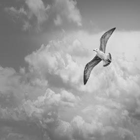 Freedom by Dražen Škrinjarić - Black & White Animals ( bird, wing, sky, fly, blue, wings, air, birds, float, birding )