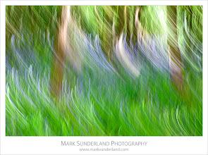 Photo: Bluebell Impression, Nidd Gorge, Knaresborough, Yorkshire, England