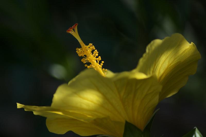 #Yellow  di michelle44