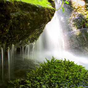 Water & Moss by Ty Shults - Nature Up Close Water ( water, other, waterfall, moss, rock, beauty, flow, avatar, drip, tranquil, peace, summer, alien, sunshine, world,  )