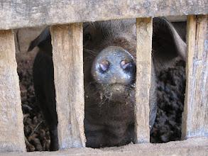 Photo: Piggy