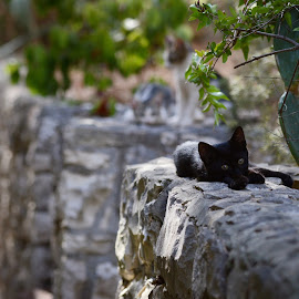 by Ivanka Ruter - Animals - Cats Kittens