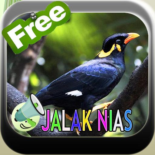 Kicau Master Jalak Nias Hd التطبيقات على Google Play