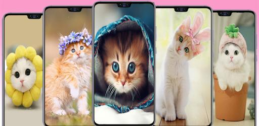 Cat Wallpapers Cute Kitten Images التطبيقات على Google Play