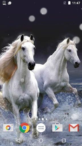 马匹 动态壁纸 HD