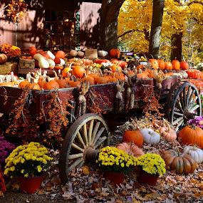 Pumpkin Wagon by Carl Testo - Nature Up Close Gardens & Produce ( autumn, foliage, pumpkins, wagon, flowers )