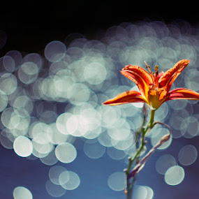*** by Valentyn Kolesnyk - Nature Up Close Flowers - 2011-2013