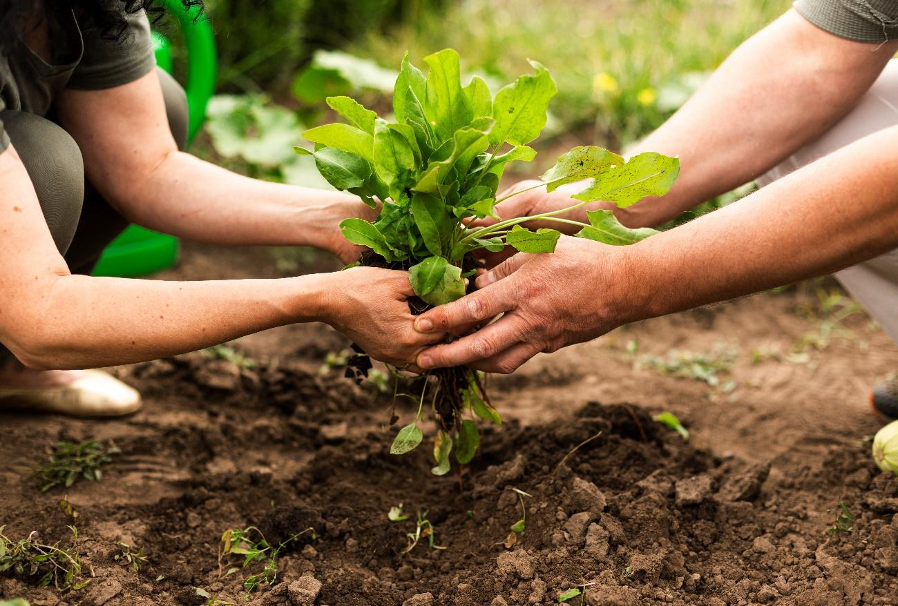 Homeopatia na Agricultura