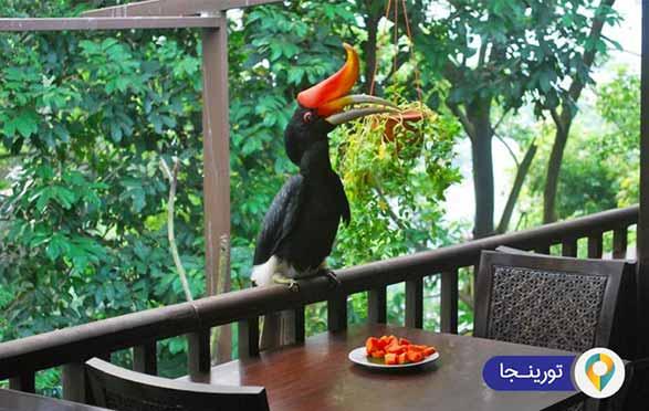 باغ پرندگان کوالالامپور
