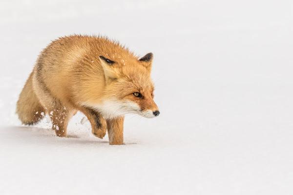 Soft as snow di Alan_Gallo