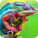 Chameleon Pack 2 Wallpaper icon