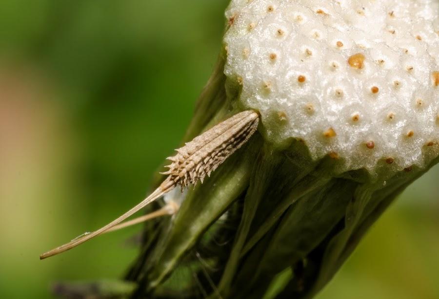 the last seed by Mihai Bratu - Abstract Macro ( november, autumnal, autumn, seed, close up, closeup, flower )