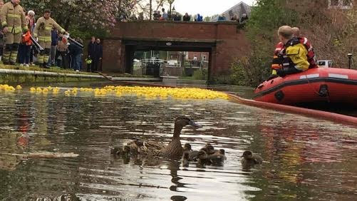 Fire station open day and duck race