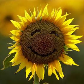 sunflower by Anita Richley - Uncategorized All Uncategorized