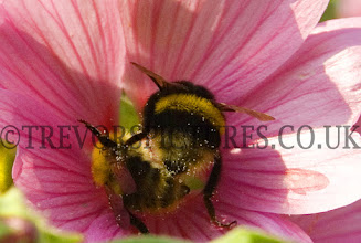 Photo: FIGHTING BEES