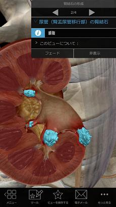 生理学と病理学:生体プロセスと疾患のおすすめ画像4