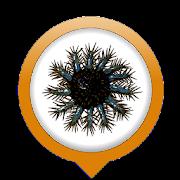 OREANET-NC