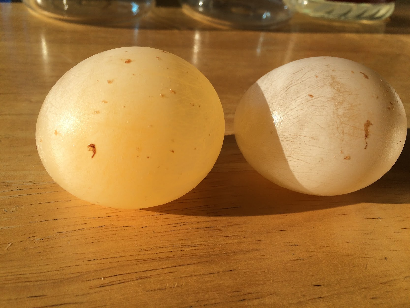 osmosis demonstration with a raw egg