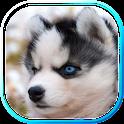 Husky Puppies live wallpaper icon