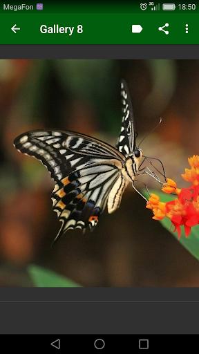 Beautiful Butterflies screenshot 3