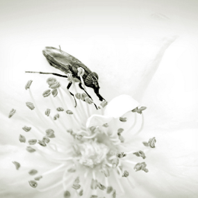 Nature at its best... by Shubhendu Bikash Mazumder - Black & White Flowers & Plants ( nature in b&w, nature, black & white, flower )