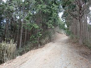 長い林道歩きに