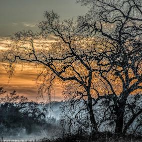 The Mist by Cerey Runyon - Uncategorized All Uncategorized