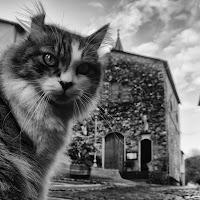 one cat di