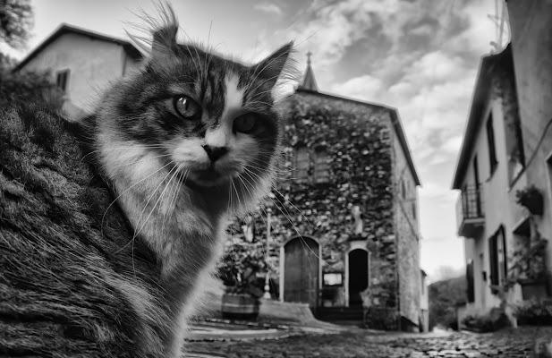one cat di dady2