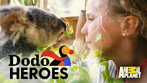 Cuddles, Care and Baby Koalas thumbnail