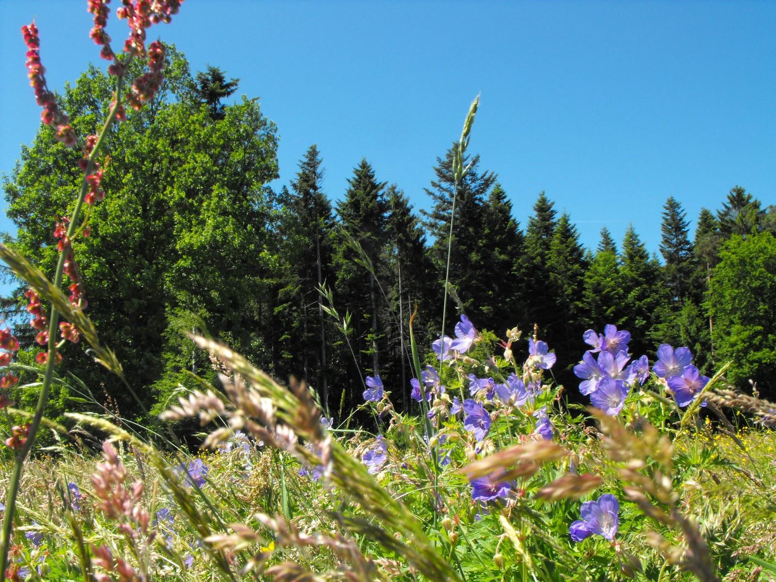 Auf Kräutersuche im Schwarzwald
