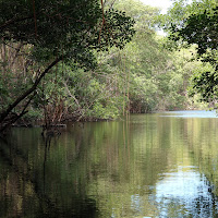 Tra le mangrovie