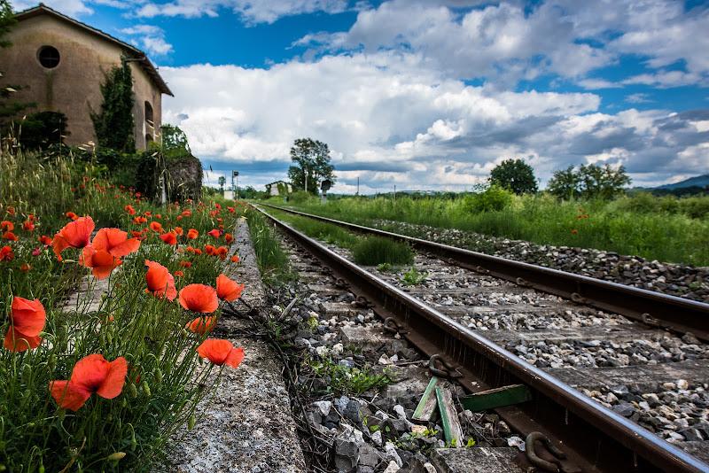 Il treno dei desideri  di Fiore Doncovio