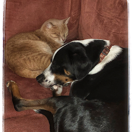 Yin and Yang by Karen Rothers - Animals - Cats Kittens ( pets, kitten, dog )