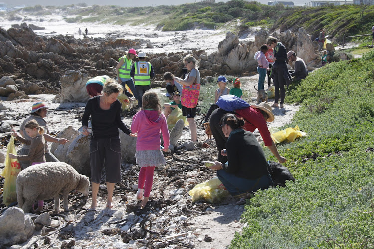 Pet sheep Montana joins residents of Pringle Bay during a coastal clean-up.