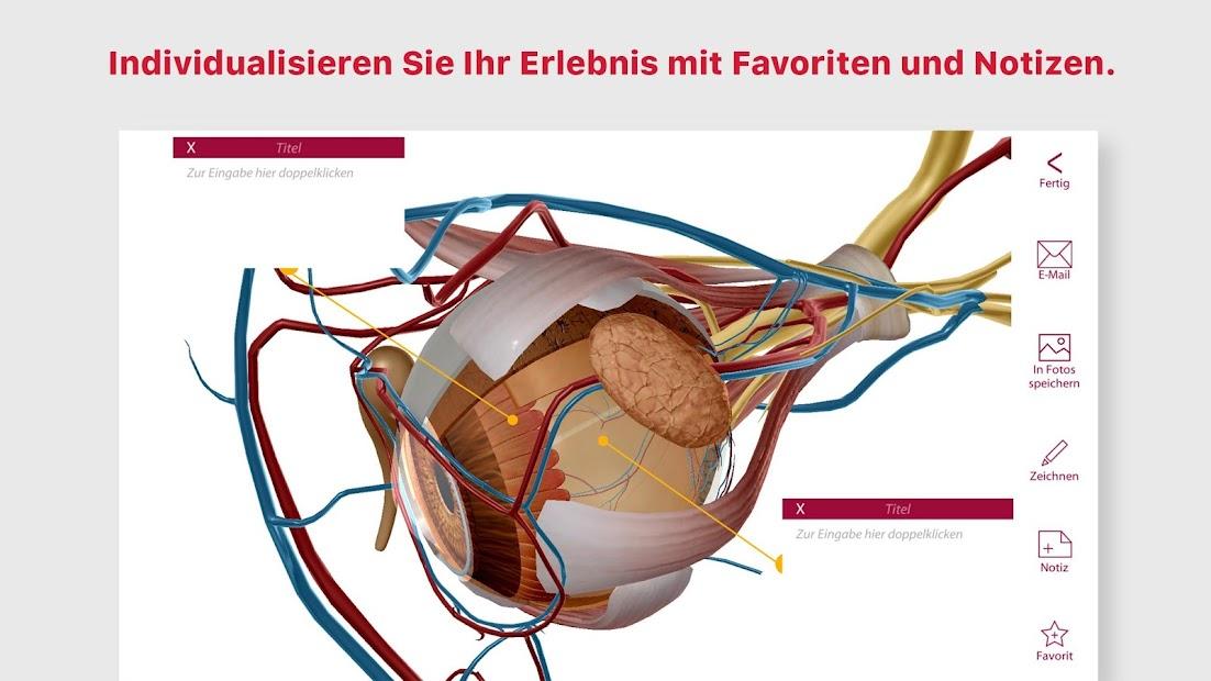 Beste Anatomie Lernhilfen Fotos - Menschliche Anatomie Bilder ...