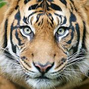 Amazing Wildlife Photo Wallpapers