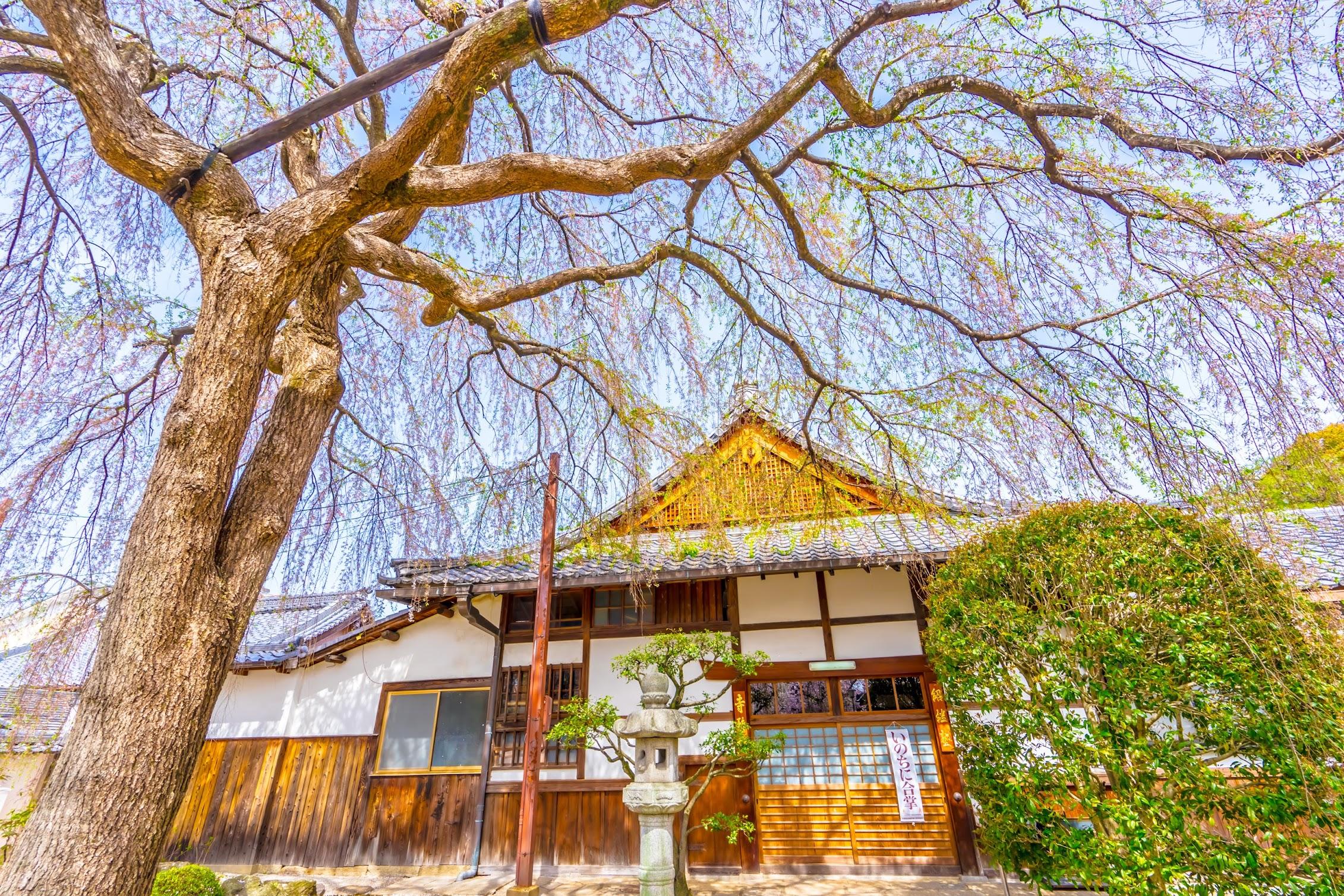 京都 本満寺1