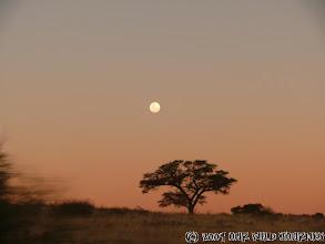 Photo: Vychod měsíce nad Kgalagadi Transfrontier NP na Jihoafrické straně / Moonrise over Kgalagadi Transfrontier NP on South Africa side