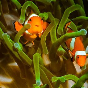 Go away by Richard ten Brinke - Animals Fish ( sea creatures, underwater life, ocean life )