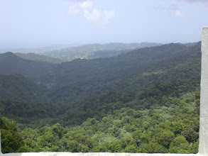 Photo: A Forest View in Puerto Rico