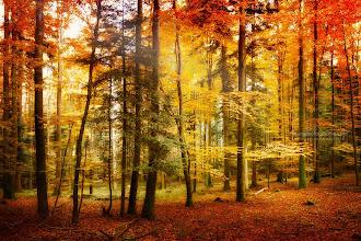 Photo: Brilliant Autumn