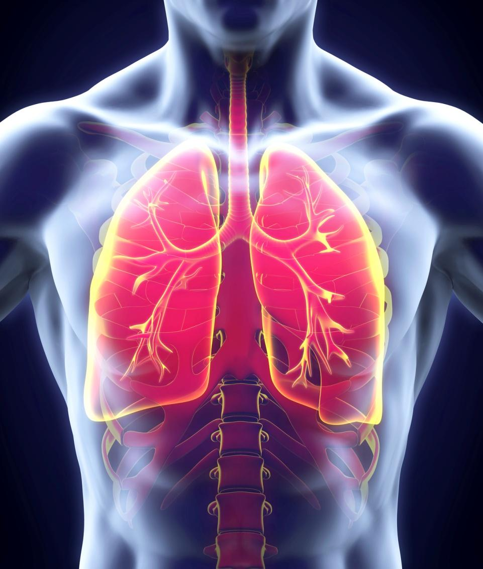 Hasil gambar untuk pneumonia