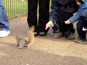 Photo: .... the hungry squirl ....