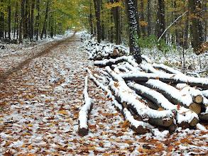 Photo: Podzim v lese Důlňák