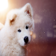 Cute Puppies And Doggy Wallpapers Free 2020 Download for PC Windows 10/8/7