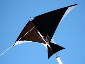 Photo: Bird-X by R-Sky Kites.