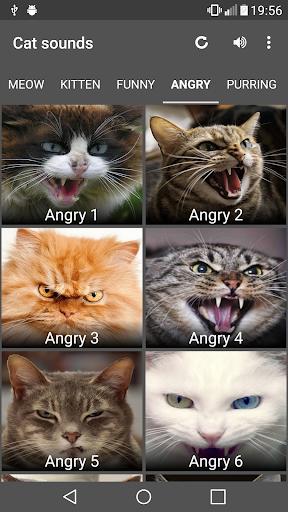 Cat Sounds image 3